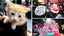 Seoul Graffiti and Subway Kitten thumbnail